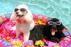 perro-verano