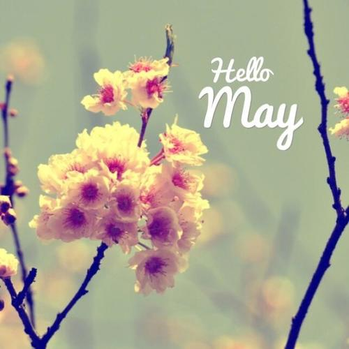 Hello-May-photo