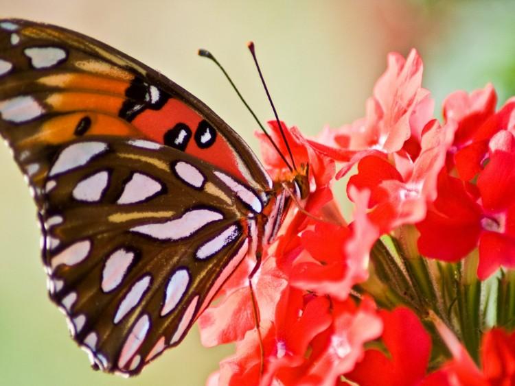 fondo-mariposa-en-la-naturaleza