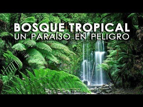 Celebran-Dia-Internacional-de-la-Preservacion-de-los-Bosques-Tropicales_56868