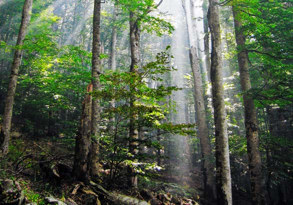 Dia_internacional_de_los_bosques_2