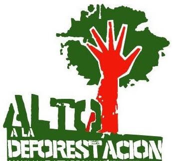 deforestacion-dia-internacional-de-la-preservacion-de-los-bosques-26dejunio-