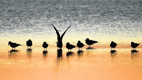 Birds are pictured at the Bahia de Cadiz natural park in Cadiz 25 October 2005. As a precaution against bird flu the Spanish government Tuesday created 18 zones extending for 10 kilometres (six miles) as sanitary cordons beyond areas of typical bird concentrations such as parkland, the ministry of agriculture said. AFP PHOTO/ JOSE LUIS ROCA