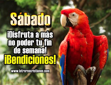 BienvenidoSabado33