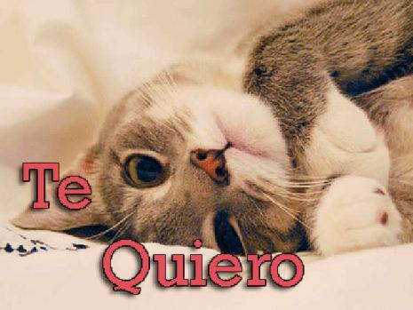 DecirTeQuiero39
