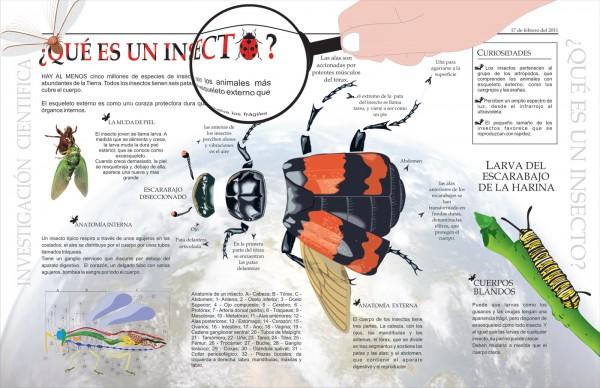 escarabajo para infografia.terminada