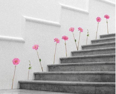 flolyingparanoias_vinilo-de-flores-en-escaleras