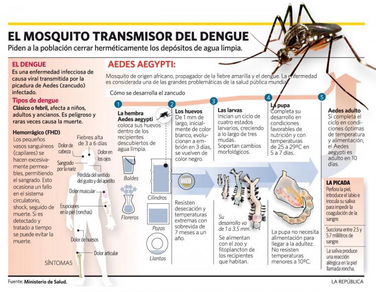 infografia-ifso-el-mosquito-transmisor-del-dengue-12-01-2011-23