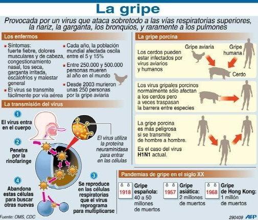 infografia gripe porcina