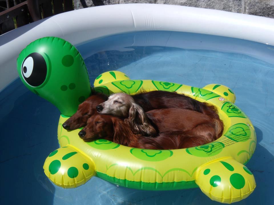 perros-flotador-verano