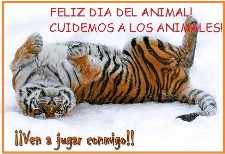 dia-del-animal-con-tigres