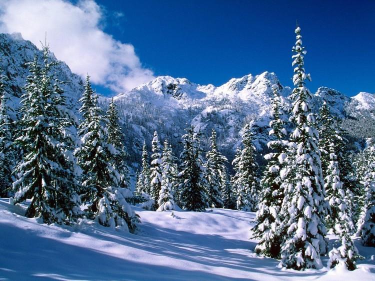 invierno-de-pinos