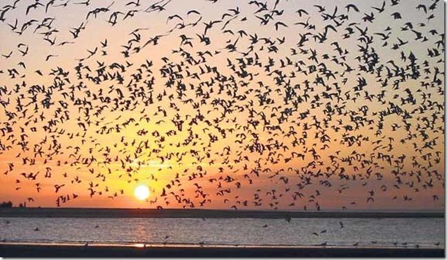 aves-migratorias (1)