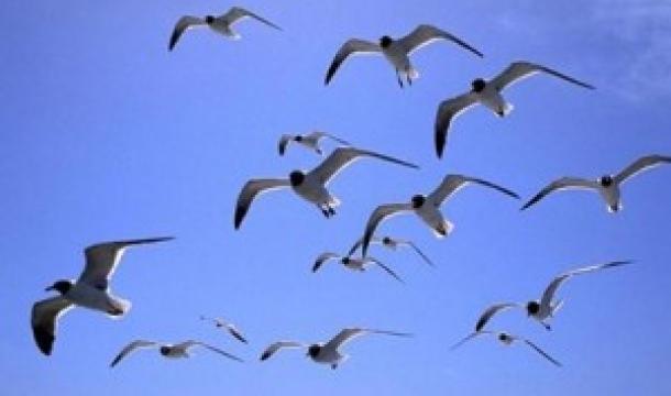 aves-volando-300x187