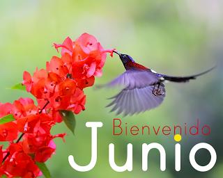 bienvenido-mes-de-junio-colibri