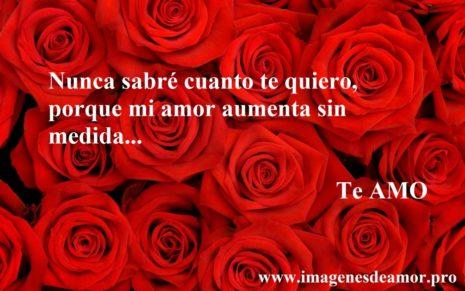 TeAmo15