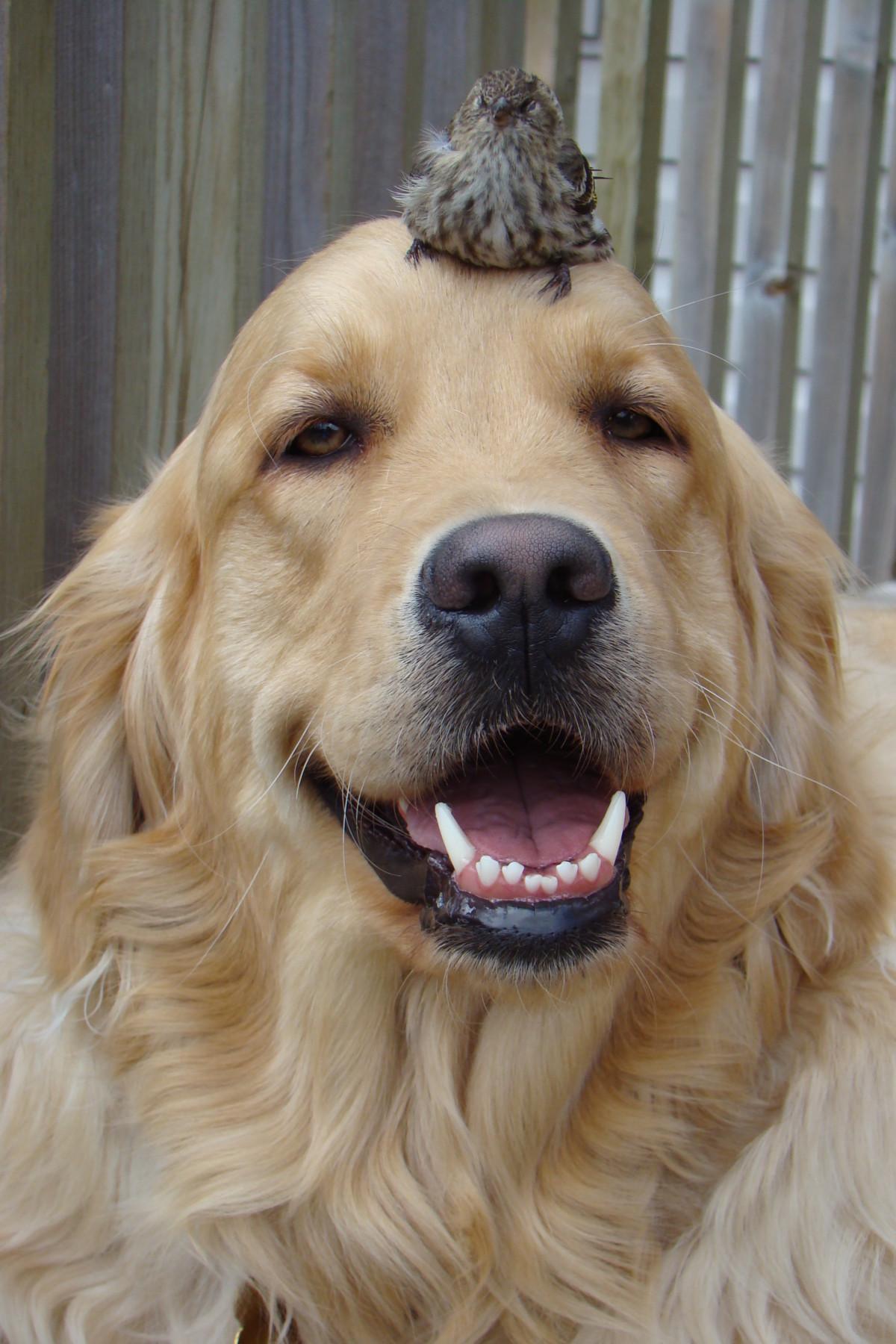 Im 225 Genes De Perros Bonitos Tiernos Y Graciosos