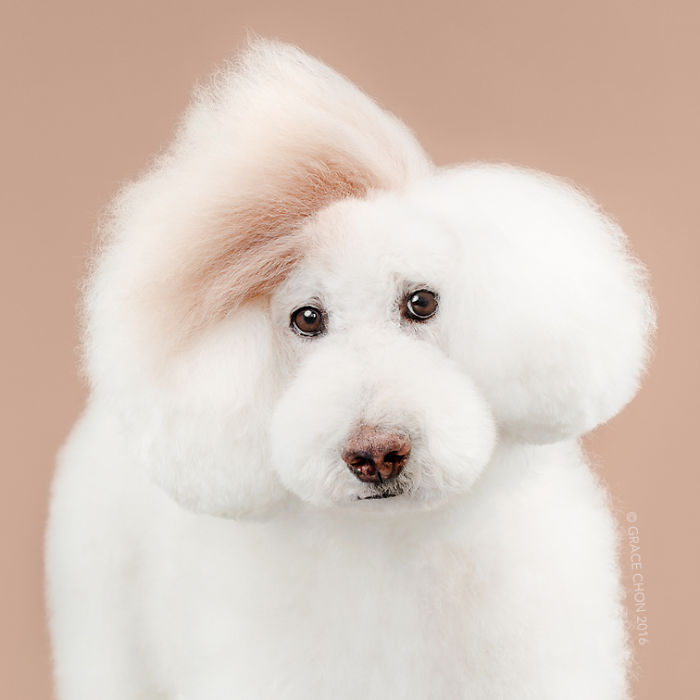 Imágenes de perros bonitos, tiernos y graciosos
